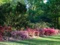 azalea, rivierenhof, rodondendron